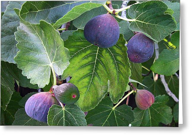 Grocer Greeting Cards - My Fig Tree Greeting Card by Charlette Miller