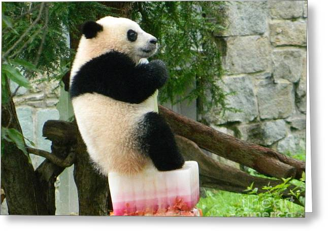 Wildlife Celebration Greeting Cards - My First Birthday Cake - Bao Bao The Panda Greeting Card by Emmy Marie Vickers