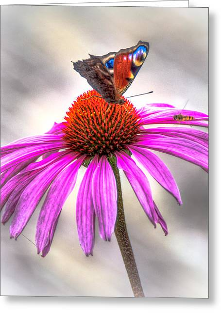 Flying Spider Greeting Cards - My Flower Greeting Card by Alex Hiemstra