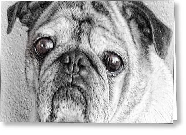 Kauai Dog Greeting Cards - My Friend Greeting Card by Charles Davis