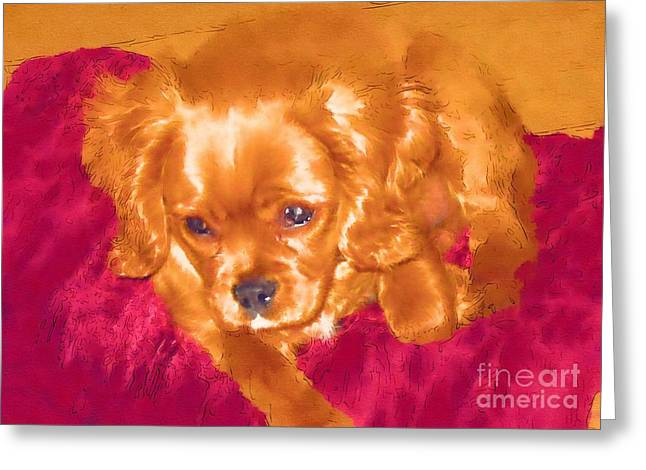 Cushions Mixed Media Greeting Cards - My friend Copper the King Charles Spaniel Puppy Greeting Card by Jonathan Steward
