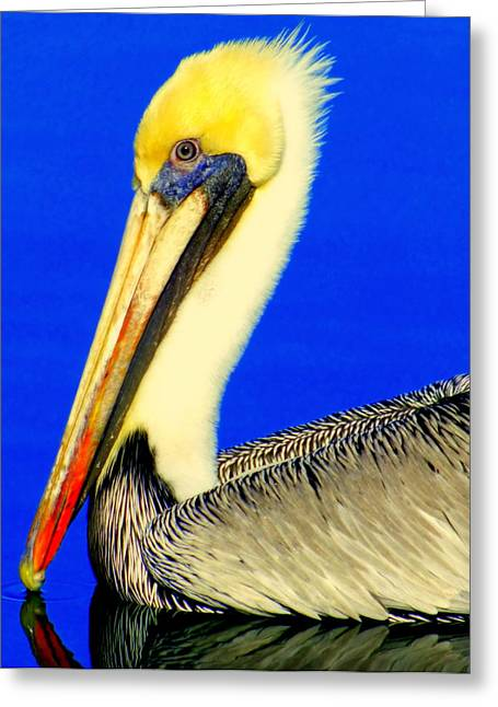 My Friend Pelli Greeting Card by Karen Wiles