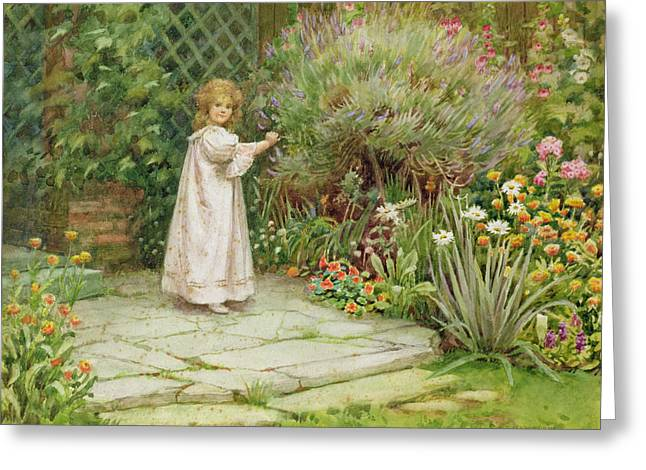 Trellis Paintings Greeting Cards - My Garden Greeting Card by William Ashburner