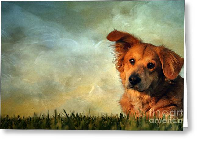 Doggie Photographs Greeting Cards - My Girl Greeting Card by Darren Fisher