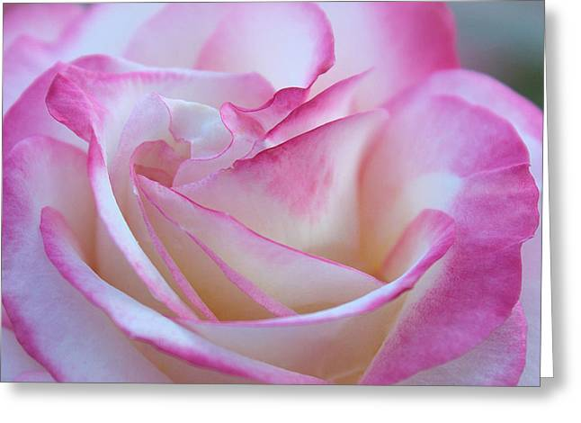 Tenderly Greeting Cards - My Heart in a Rose Greeting Card by  The Art Of Marilyn Ridoutt-Greene