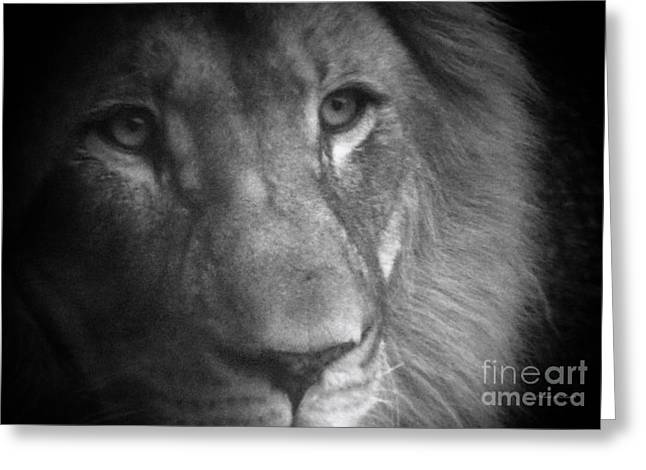 Growling Greeting Cards - My Lion Eyes Greeting Card by Thomas Woolworth