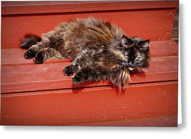 Shelter Kitty Greeting Cards - My Little Ragamuffin Girl Greeting Card by Patricia Strand