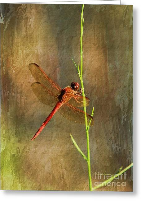 Dragonflies Greeting Cards - My Little Red Friend Greeting Card by Deborah Benoit