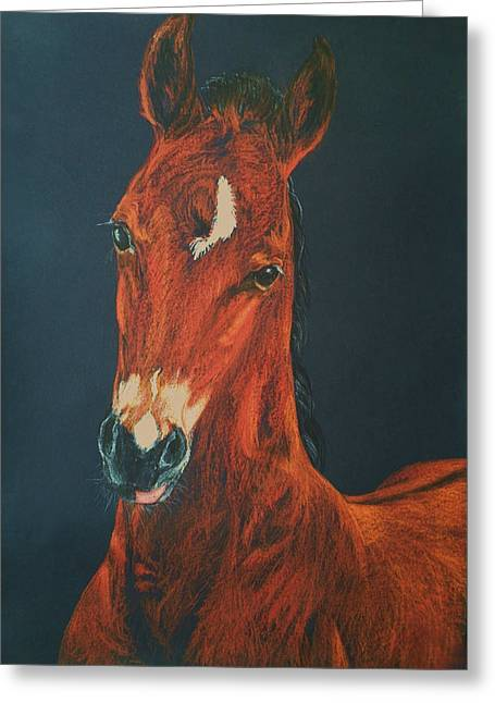 Equestrian Prints Pastels Greeting Cards - My lovely foal Greeting Card by Dorota Zdunska