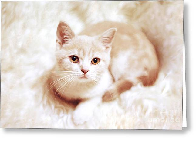 House Cat Greeting Cards - My master Greeting Card by Aiolos Greek Collections