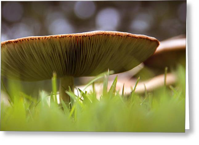 Fungi Greeting Cards - My Mushroom Neighbor  Greeting Card by Mike McGlothlen