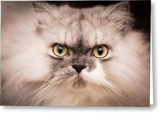 Cat Photographs Greeting Cards - My Obsession  Greeting Card by Tamara Dattilo