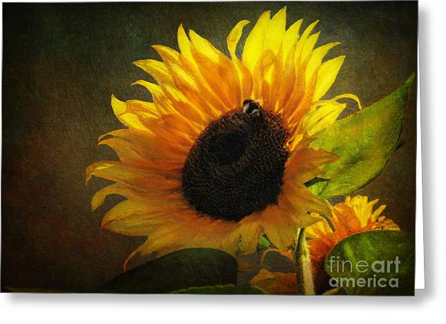 Yellow Sunflower Greeting Cards - ...My Only Sunshine Greeting Card by Lianne Schneider