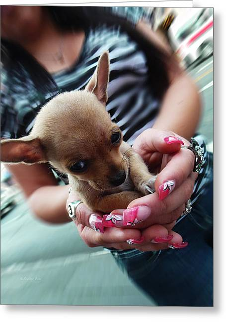 Chiwawa Greeting Cards - My Palm Sweetheart Greeting Card by Xueling Zou