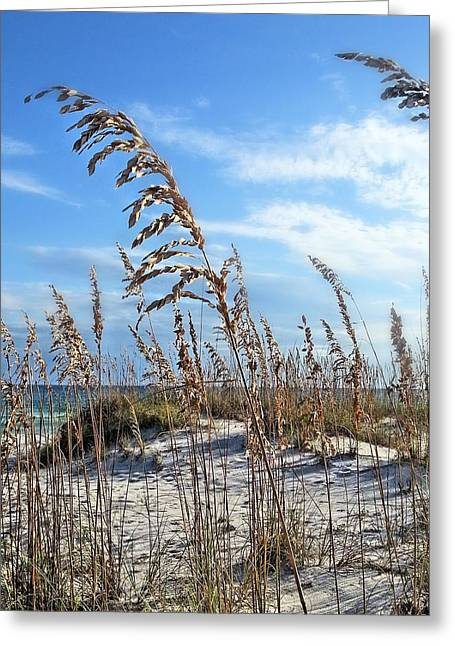 Florida Panhandle Greeting Cards - My Paradise  Greeting Card by JC Findley