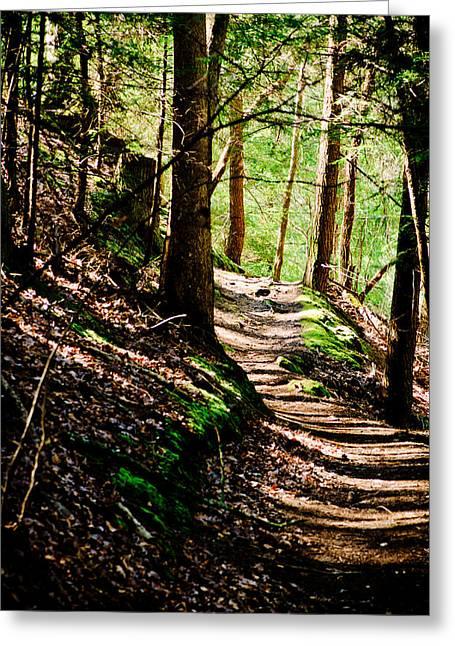 Path Pyrography Greeting Cards - My Path Greeting Card by Shirley Tinkham