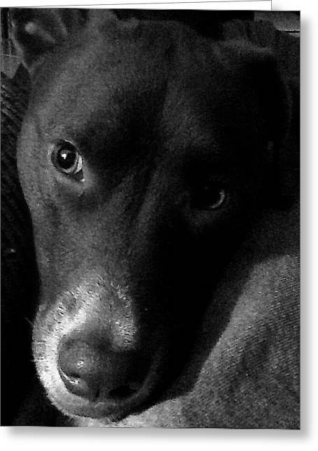 Chocolate Lab Greeting Cards - My Perfect Companion Greeting Card by Rita Mueller