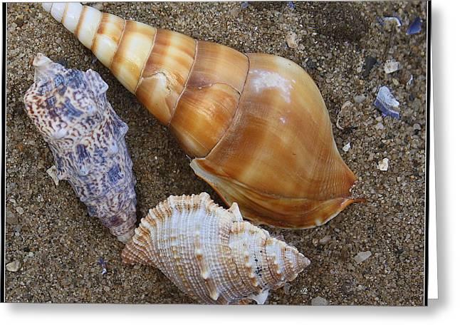 My Seashells Greeting Card by  Photographic Art and Design by Dora Sofia Caputo