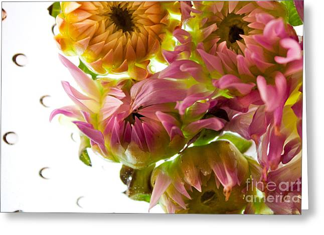 Purple Gladiolas Greeting Cards - My Secret Garden Greeting Card by Bobby Villapando
