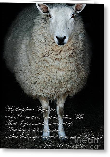 Country Woolies Greeting Cards - My Sheep Hear My Voice Greeting Card by Stephanie Frey