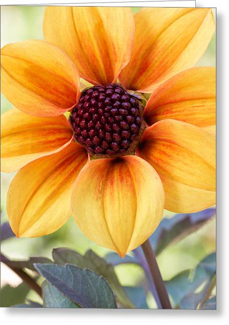 My Sunshine Greeting Card by Heidi Smith