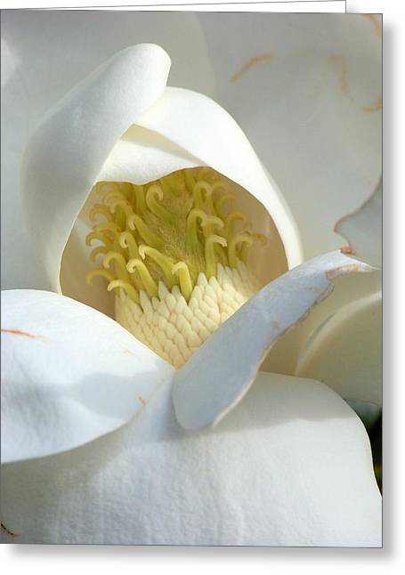 Flower Blossom Greeting Cards - My Sweet Magnolia Greeting Card by Karen Wiles