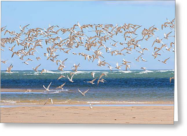Seabirds Greeting Cards - My Tern Greeting Card by Bill  Wakeley