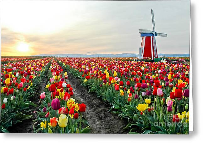 Boren Greeting Cards - My Touch Of Holland 2 Greeting Card by Nick  Boren