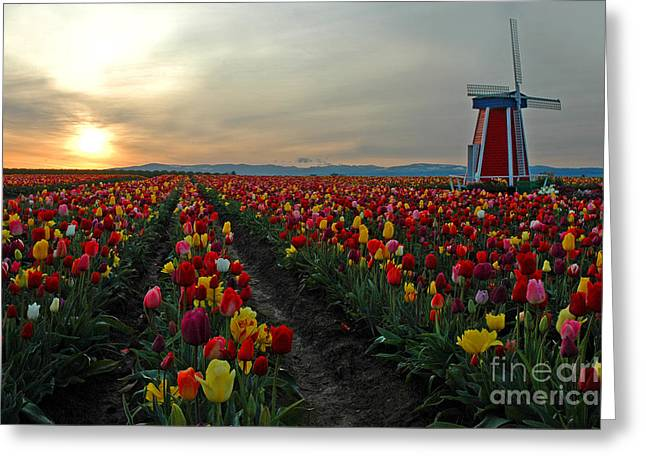 Pacificnorthwest Greeting Cards - My Touch Of Holland Greeting Card by Nick  Boren