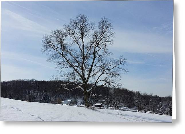 Senic View Greeting Cards - My tree Greeting Card by Bradford j Cole