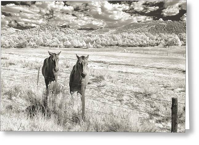 Colorado Artwork Greeting Cards - My Two Friends Greeting Card by Jon Glaser