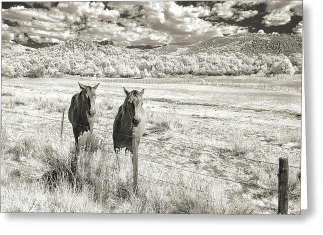 My Two Friends Greeting Card by Jon Glaser