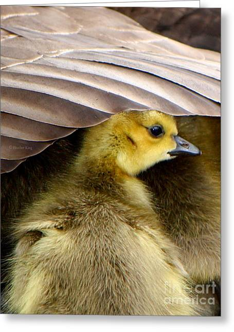 Mother Goose Greeting Cards - My Umbrella Greeting Card by Heather King