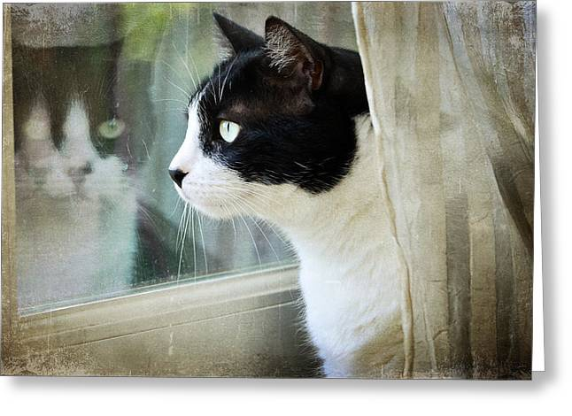 Felines Photographs Greeting Cards - My View Greeting Card by Fraida Gutovich