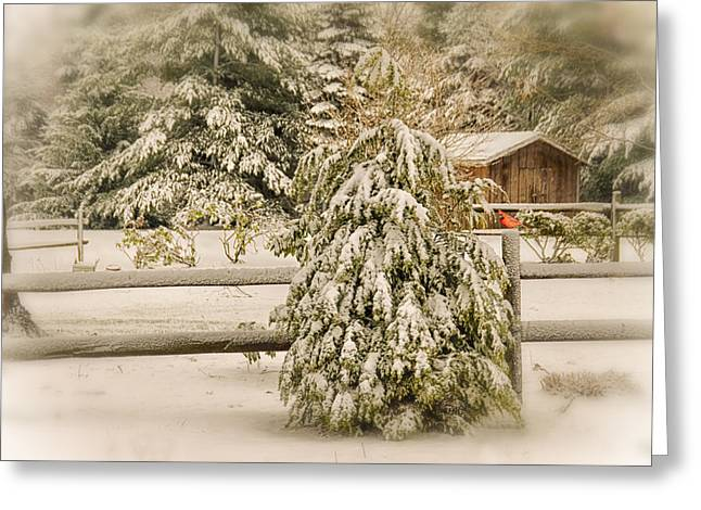 Shed Digital Art Greeting Cards - My View Greeting Card by Mary Timman