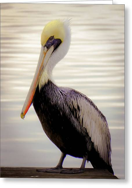 Pelican Greeting Cards - My Visitor Greeting Card by Karen Wiles