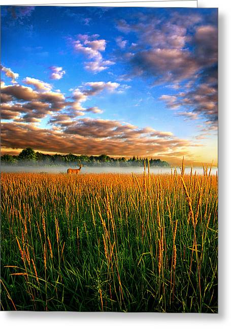 Geographic Greeting Cards - My Way Back Greeting Card by Phil Koch