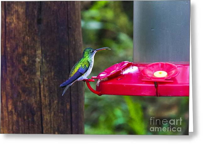 Hovering Greeting Cards - My What A Long Tongue You Have Greeting Card by Al Bourassa