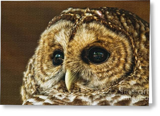 Owl Eyes Greeting Cards - My What Big Eyes You Have Greeting Card by Lois Bryan