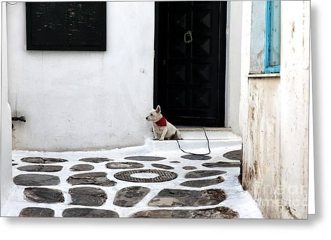 Guard Dog Greeting Cards - Mykonos Guard Dog Greeting Card by John Rizzuto