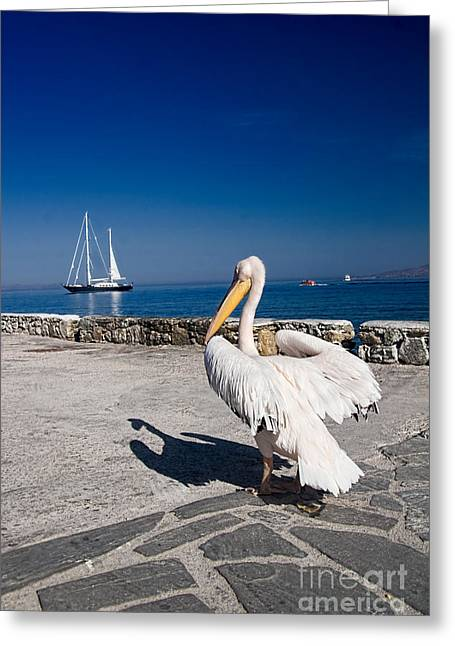 Idyllic Greeting Cards - Mykonos Pelican Greeting Card by David Smith