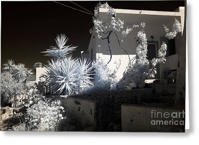 Ir Photography Greeting Cards - Mykonos Plants infrared Greeting Card by John Rizzuto