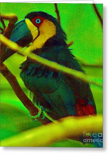 Trix Greeting Cards - Mynah Bird Greeting Card by Craig Wood