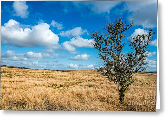 Grassland Greeting Cards - Mynydd Hiraethog Greeting Card by Adrian Evans