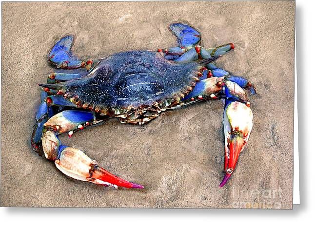 Fiddler Crab Greeting Cards - Myrtle Beach Blue Crab Greeting Card by Jeff McJunkin