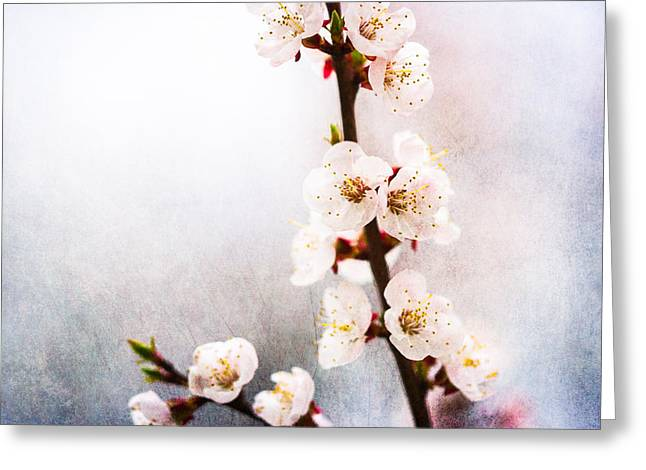 Fruit Tree Art Greeting Cards - Mysteries Of Spring 1 Greeting Card by Alexander Senin