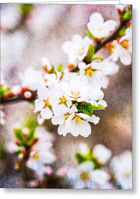 Fruit Tree Art Greeting Cards - Mysteries Of Spring 10 - Square Greeting Card by Alexander Senin