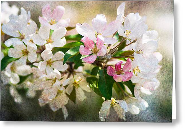 Fruit Tree Art Greeting Cards - Mysteries Of Spring 11 Greeting Card by Alexander Senin