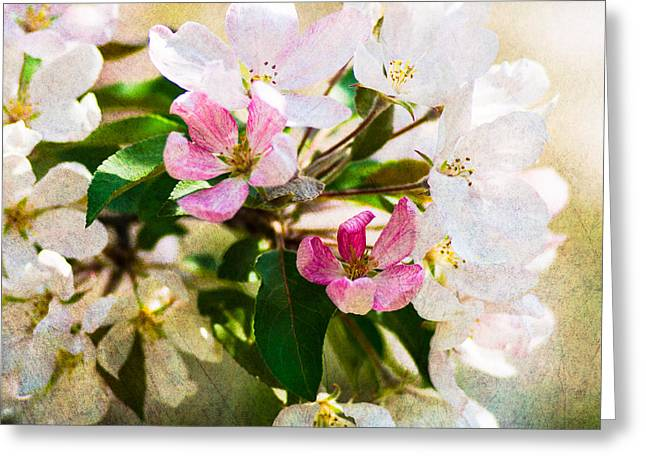 Fruit Tree Art Greeting Cards - Mysteries Of Spring 11 - Square Greeting Card by Alexander Senin