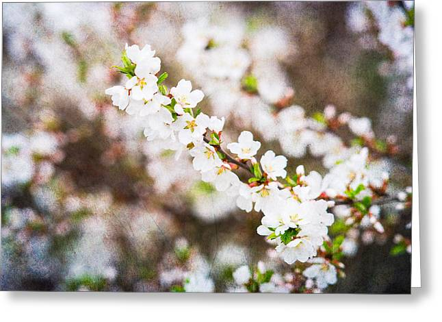 Fruit Tree Art Greeting Cards - Mysteries Of Spring 12 Greeting Card by Alexander Senin